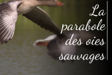 oies sauvages